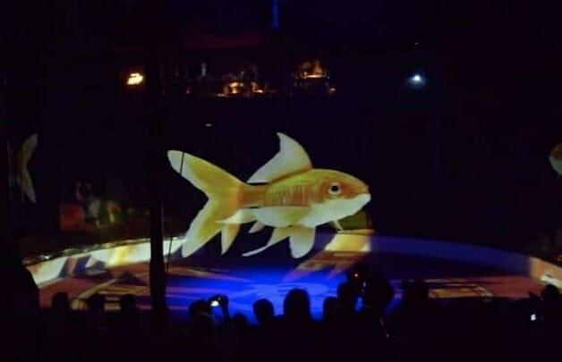 Circo troca animais de verdade por show com hologramas 3D-peixes
